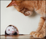 cat for mouse and rat control